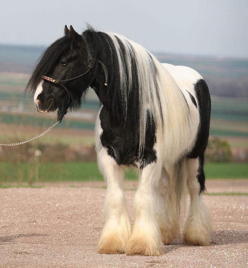 TINKY TOY, encore un cheval de rêves au Vallon... Tinky_17