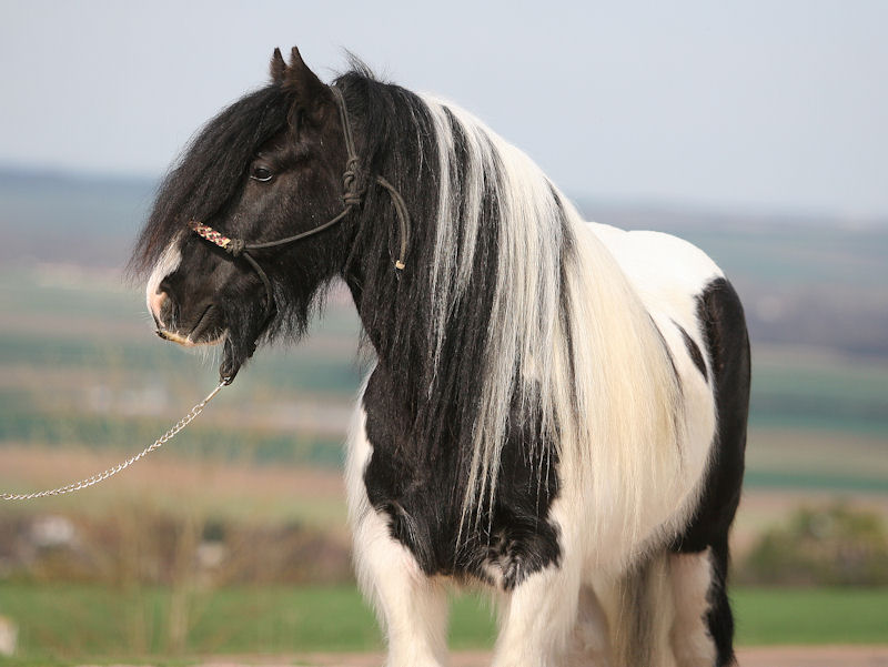 TINKY TOY, encore un cheval de rêves au Vallon... Tinky_18