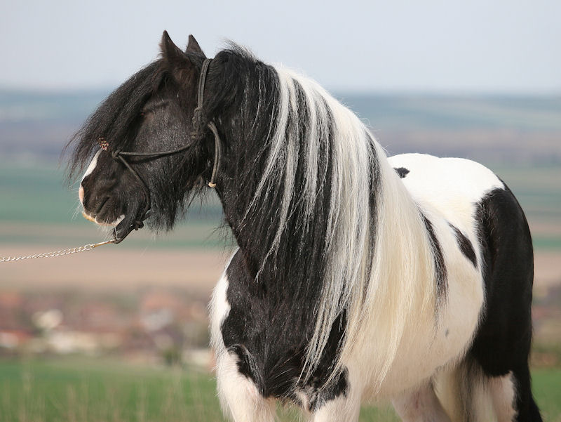 TINKY TOY, encore un cheval de rêves au Vallon... Tinky_19
