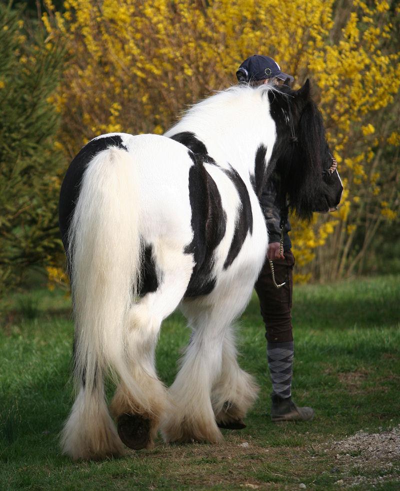 TINKY TOY, encore un cheval de rêves au Vallon... Tinky_20