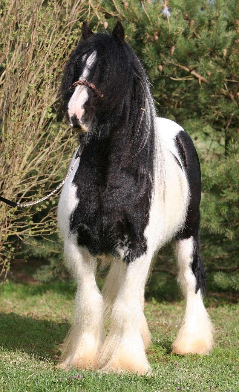 TINKY TOY, encore un cheval de rêves au Vallon... Tinky_21