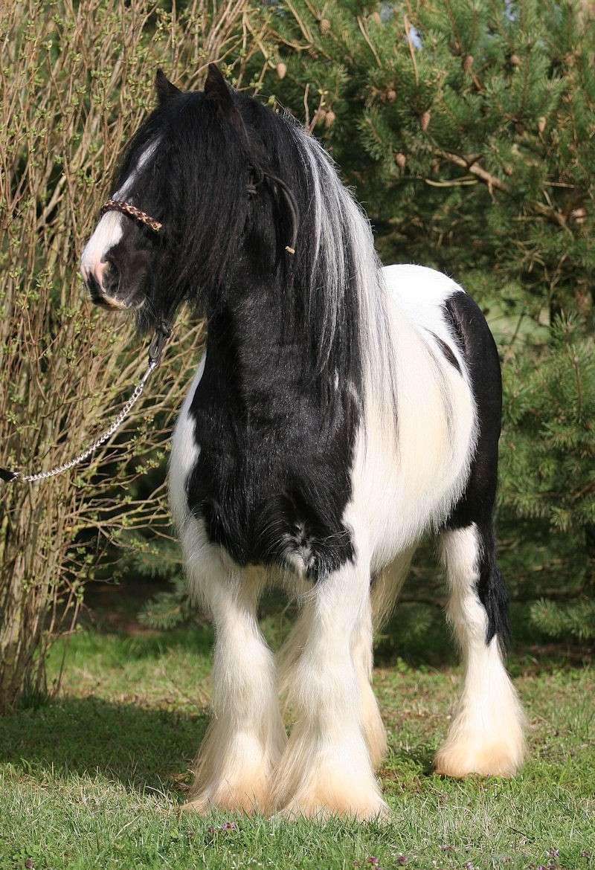 TINKY TOY, encore un cheval de rêves au Vallon... Tinky_22