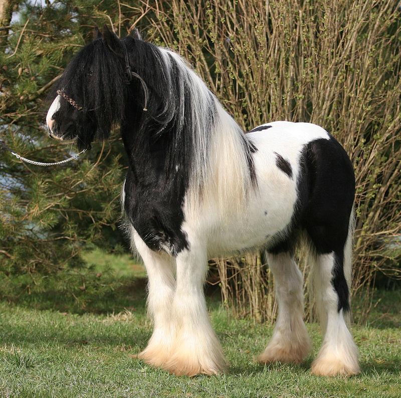 TINKY TOY, encore un cheval de rêves au Vallon... Tinky_24