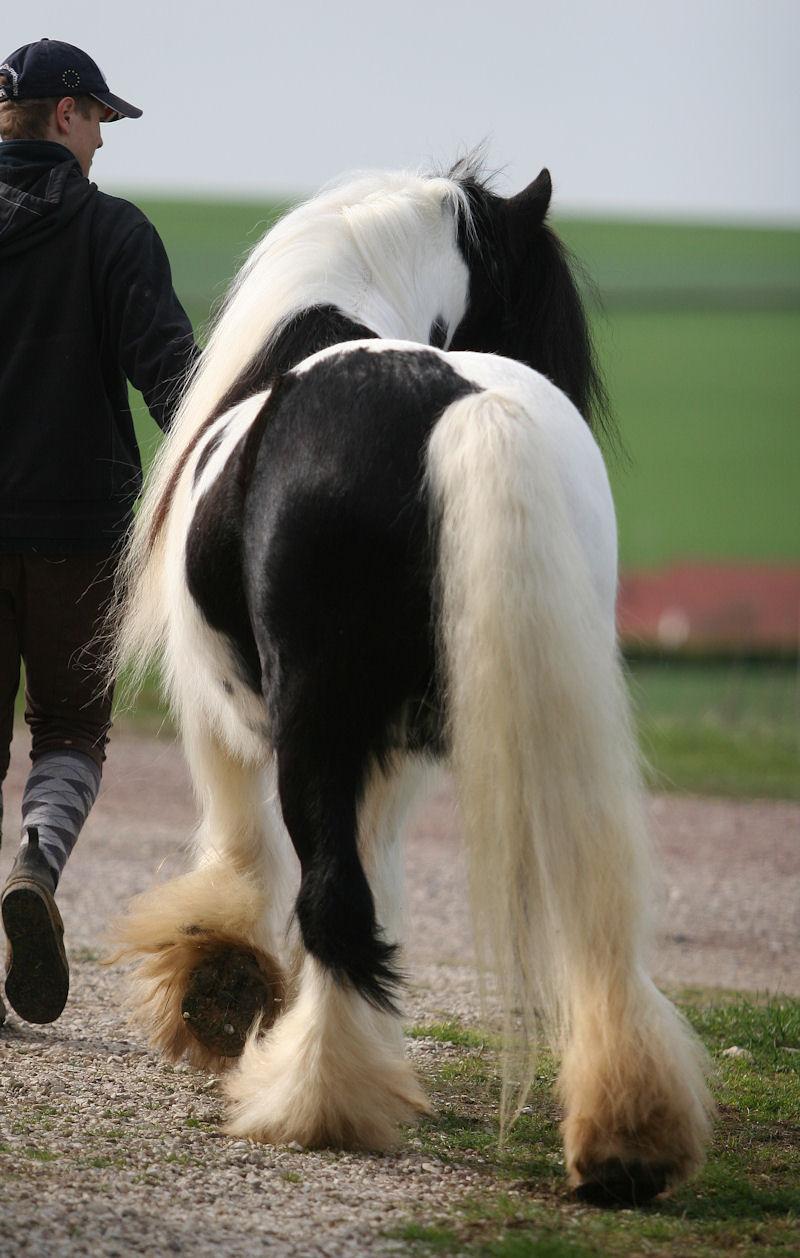 TINKY TOY, encore un cheval de rêves au Vallon... Tinky_25