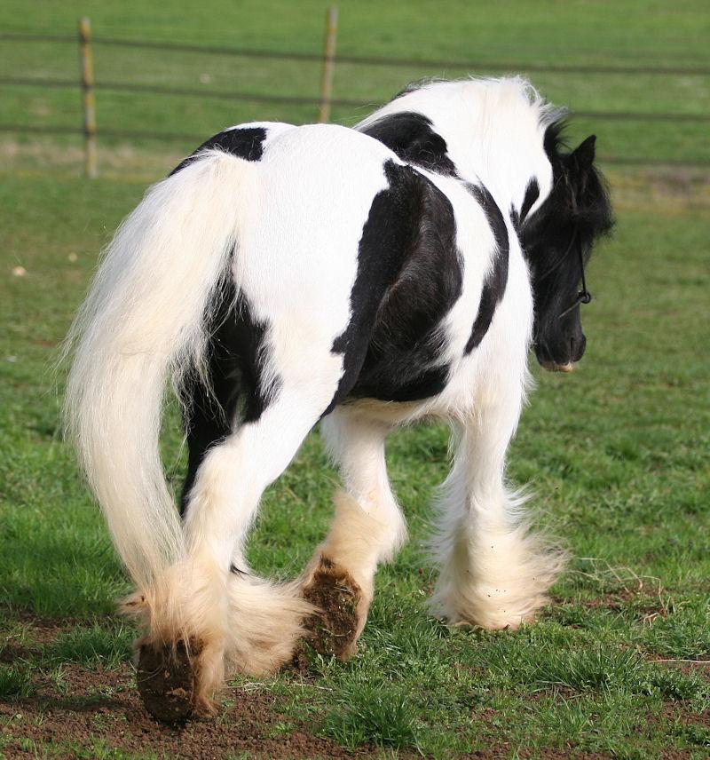 TINKY TOY, encore un cheval de rêves au Vallon... Tinky_26