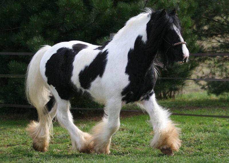 TINKY TOY, encore un cheval de rêves au Vallon... Tinky_29