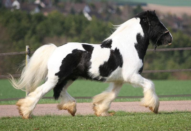 TINKY TOY, encore un cheval de rêves au Vallon... Tinky_31
