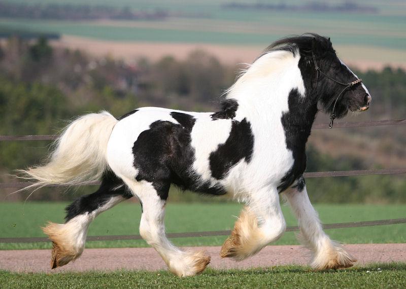 TINKY TOY, encore un cheval de rêves au Vallon... Tinky_33