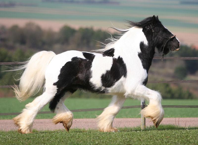 TINKY TOY, encore un cheval de rêves au Vallon... Tinky_34