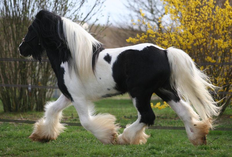 TINKY TOY, encore un cheval de rêves au Vallon... Tinky_36