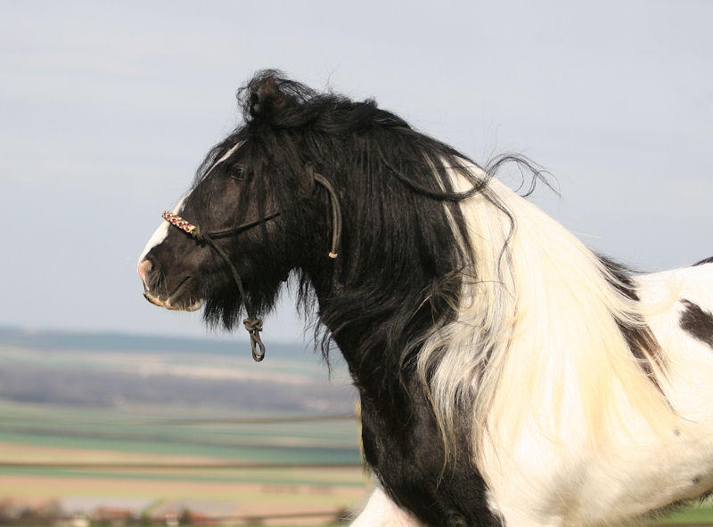 TINKY TOY, encore un cheval de rêves au Vallon... Tinky_37