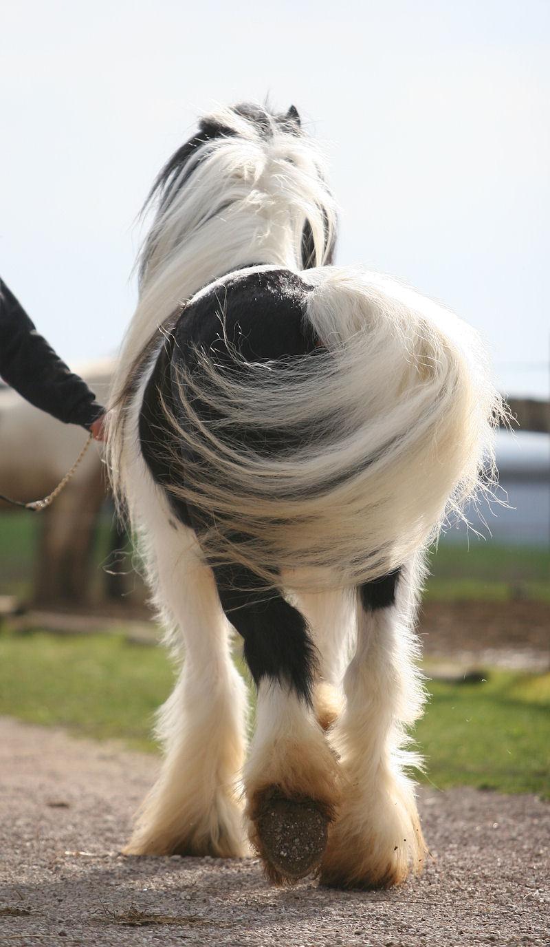 TINKY TOY, encore un cheval de rêves au Vallon... Tinky_38