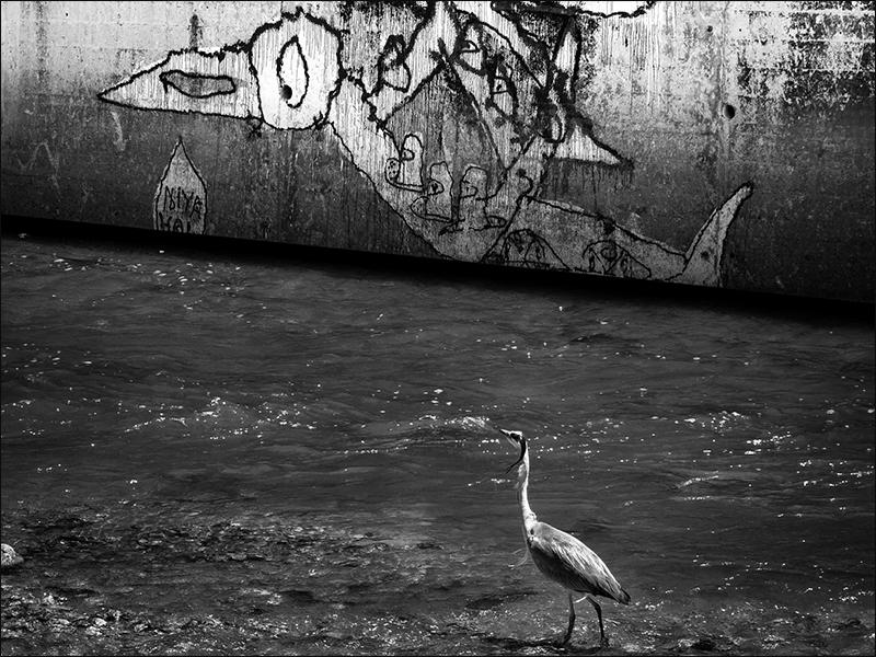 Photo du 21/06/2020 Heron_11