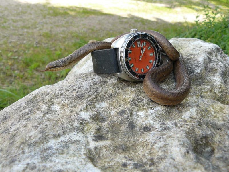 Nouvelle rubrique: Votre toolwatch pour le weed-end 21-22 Février.... - Page 2 P1060611