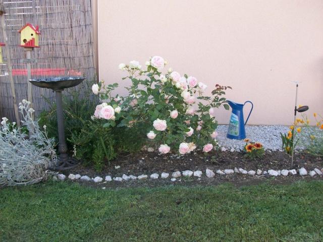 3 de mes rosiers dont un sans nom 100_9810