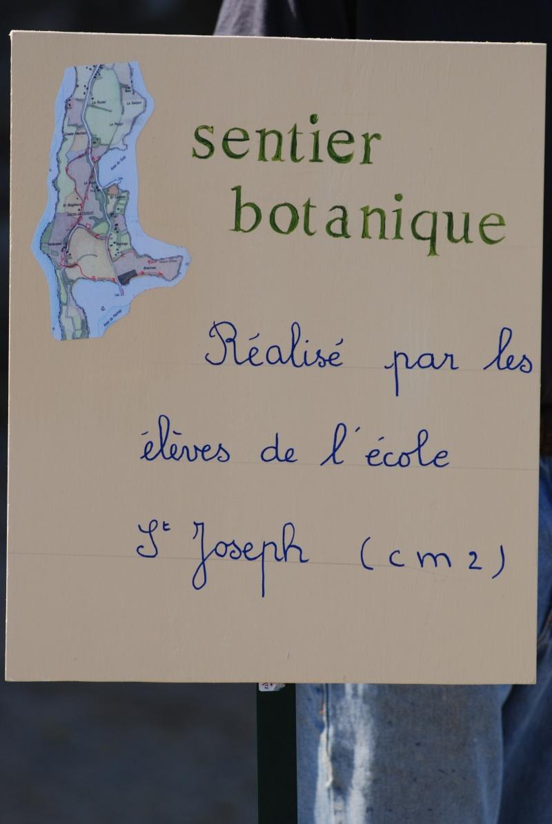 Avis aux botanistes et naturalistes! Dsc_0010