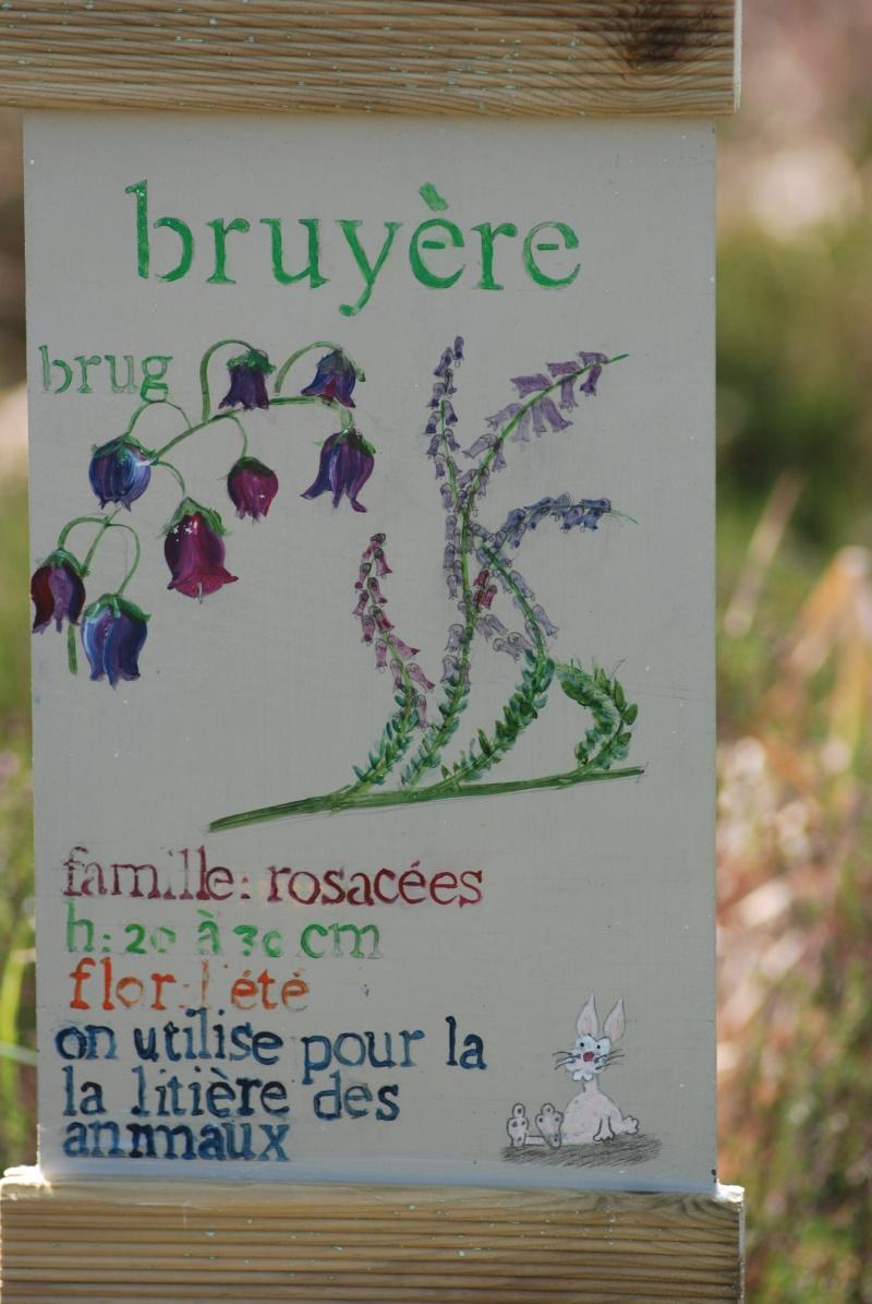 Avis aux botanistes et naturalistes! Dsc_0011