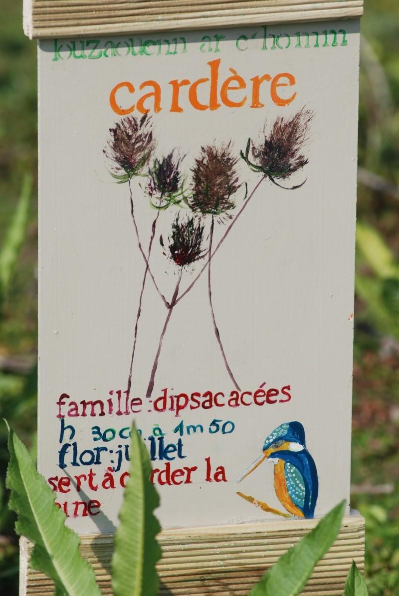 Avis aux botanistes et naturalistes! Dsc_0012