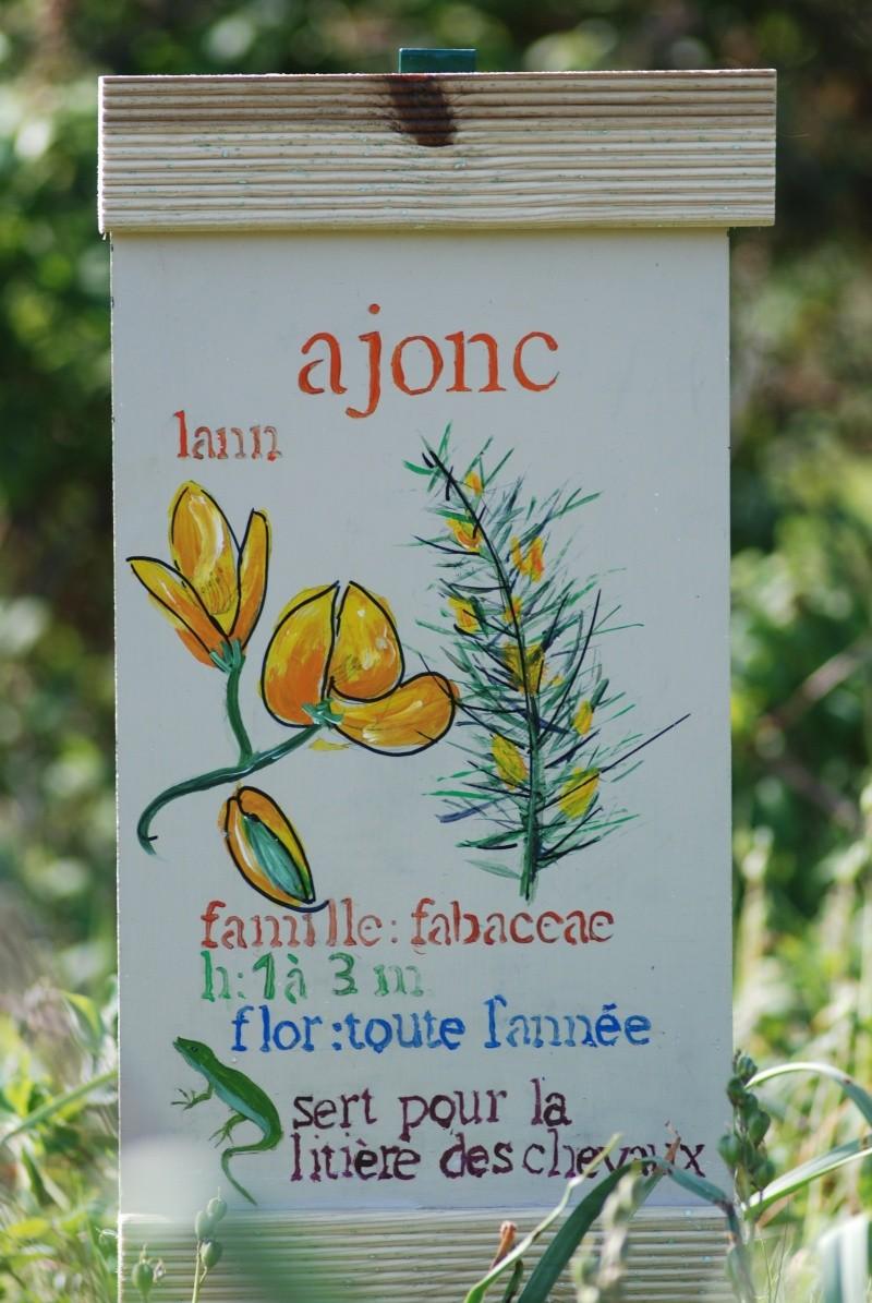 Avis aux botanistes et naturalistes! Dsc_0013