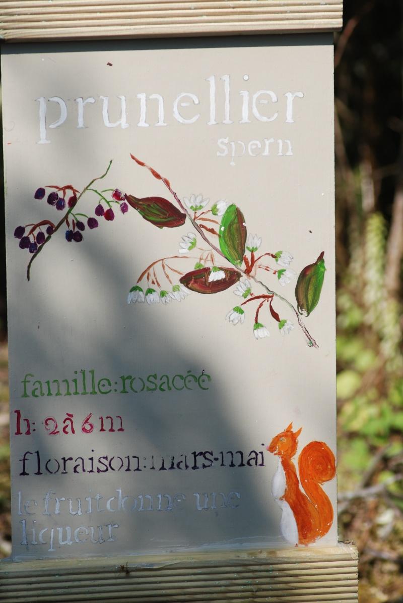 Avis aux botanistes et naturalistes! Dsc_0014