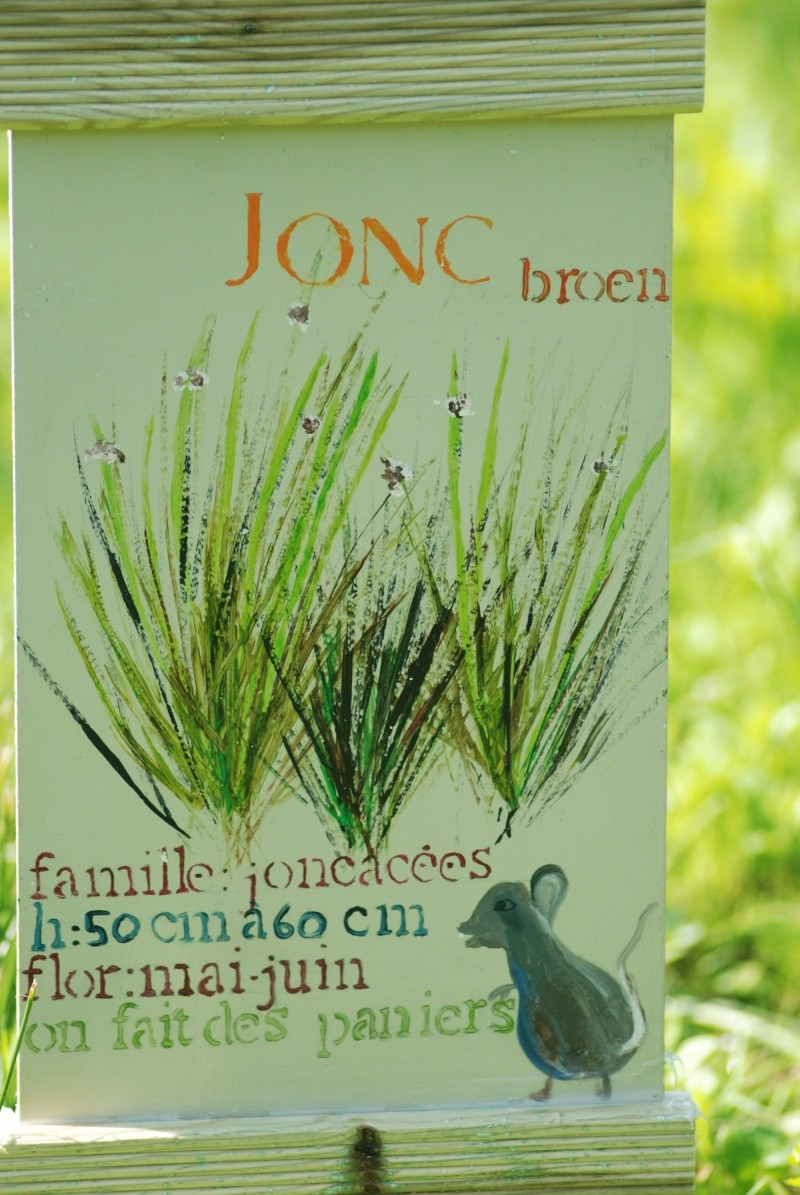Avis aux botanistes et naturalistes! Dsc_0018