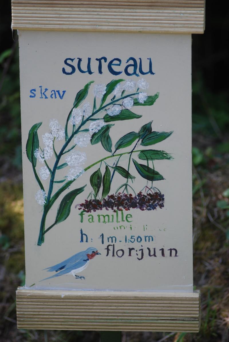 Avis aux botanistes et naturalistes! Dsc_0019
