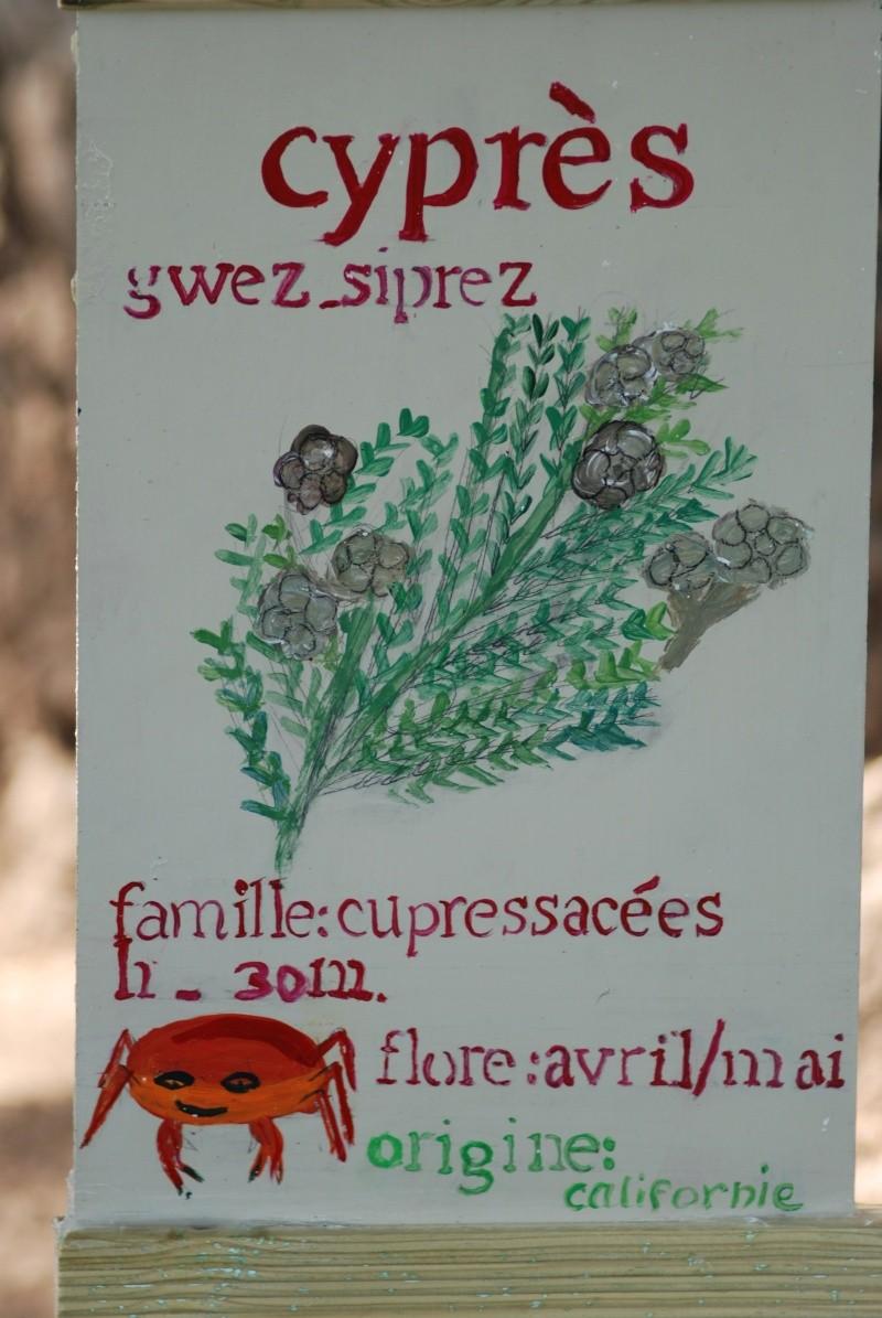Avis aux botanistes et naturalistes! Dsc_0020