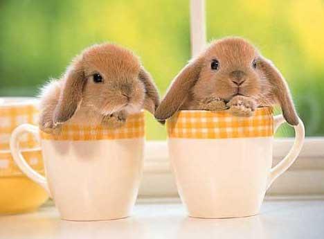 Forum lapins : Sweety Pinous