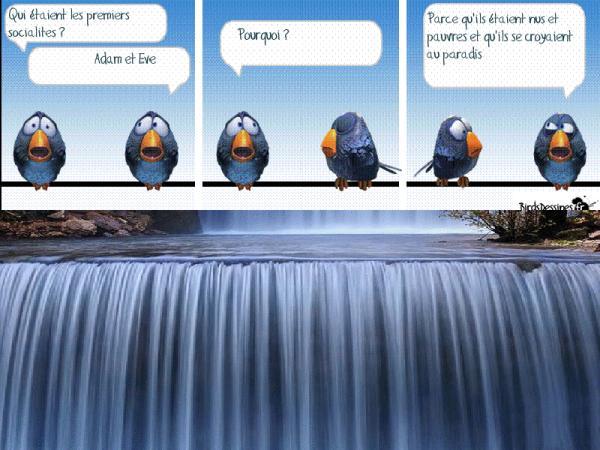 Les birds - Page 17 10336610