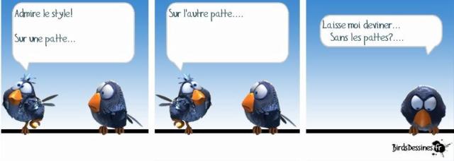 Les birds - Page 17 10361010