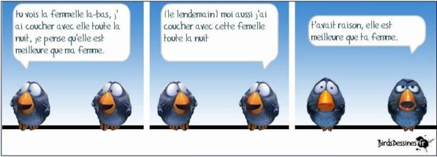 Les birds - Page 17 10366010