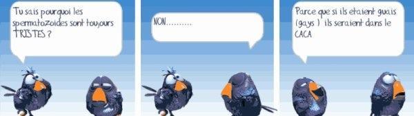 Les birds - Page 18 10408610