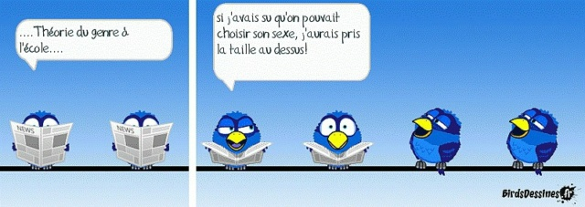 Les birds - Page 16 10712811