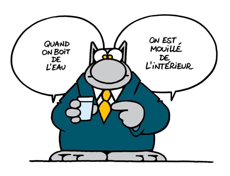 Le chat - Page 14 29473011