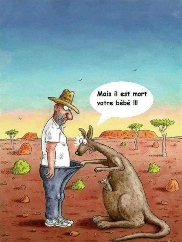 Images drôles - Page 3 31052210