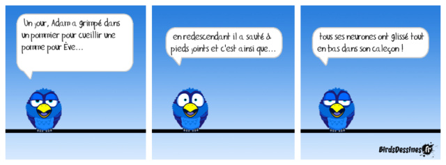 Les birds - Page 22 32460110
