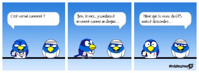 Les birds - Page 23 36485810