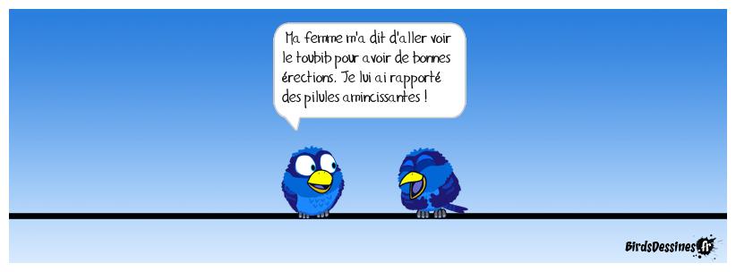 Les Birds - Page 11 38405411