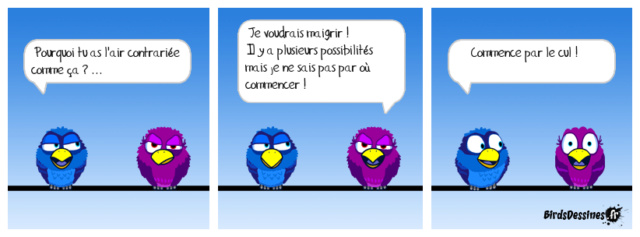 Les birds - Page 27 42666610
