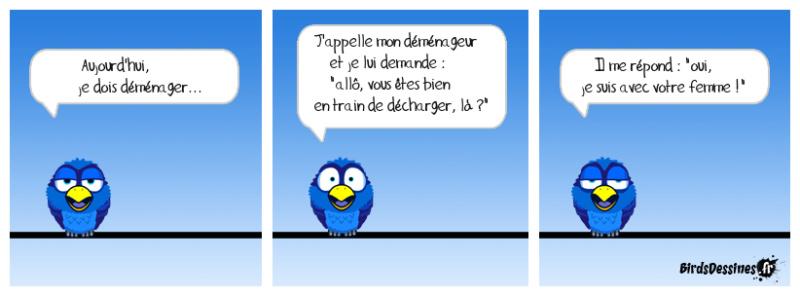 Les Birds - Page 12 43072110