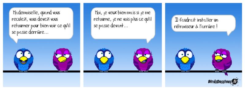Les Birds - Page 12 43155710