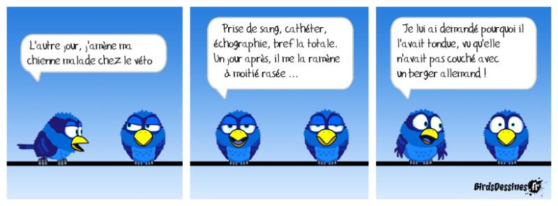 Les birds - Page 32 47576510