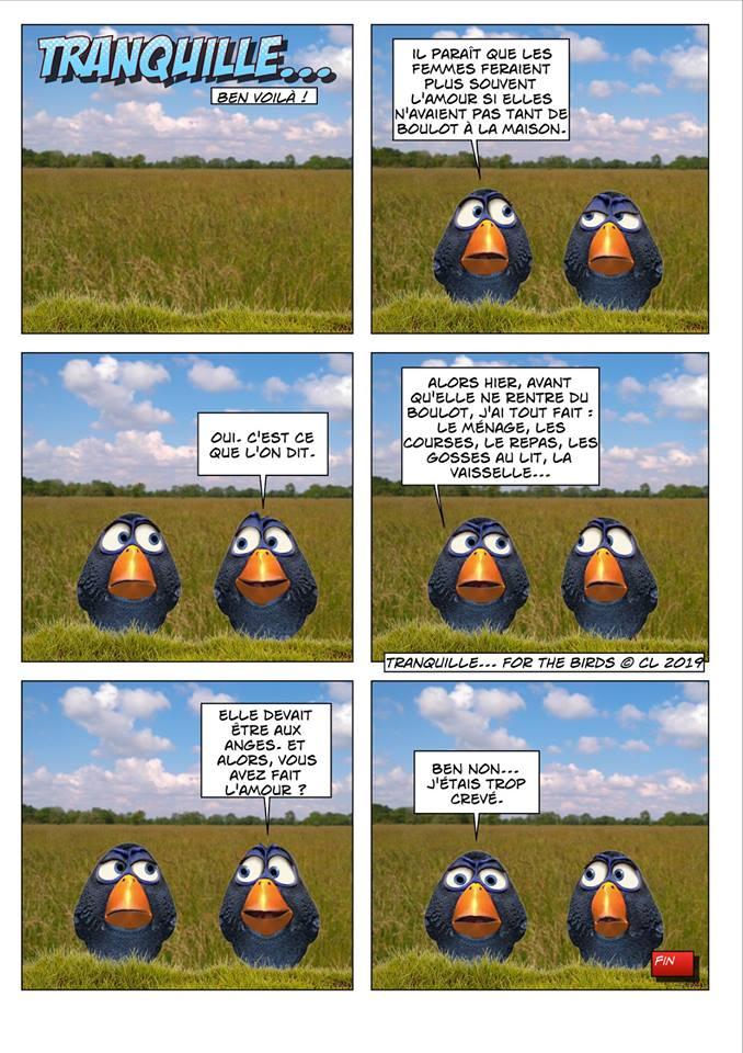 Les birds 52631610