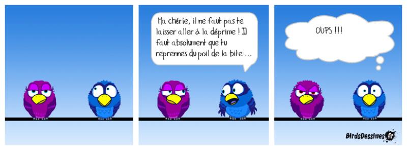 Les birds 52717010