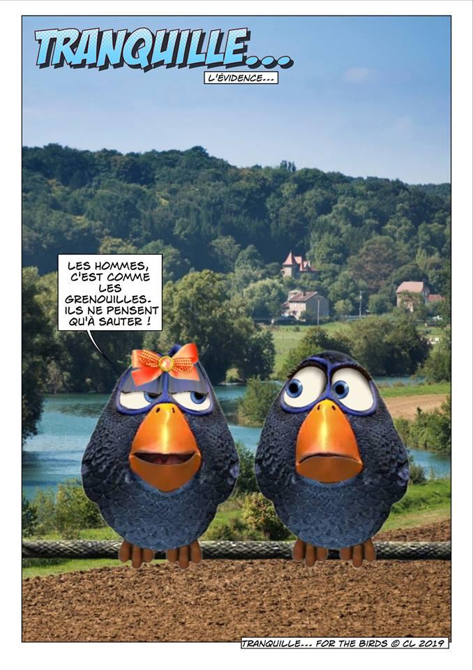 Les birds 52833010