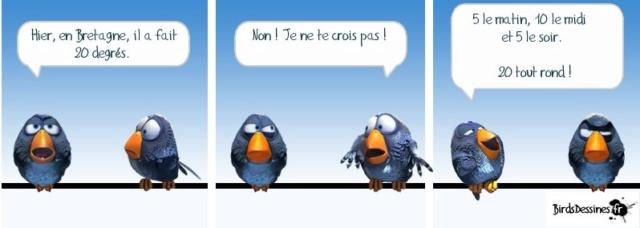 Les birds - Page 14 55934610