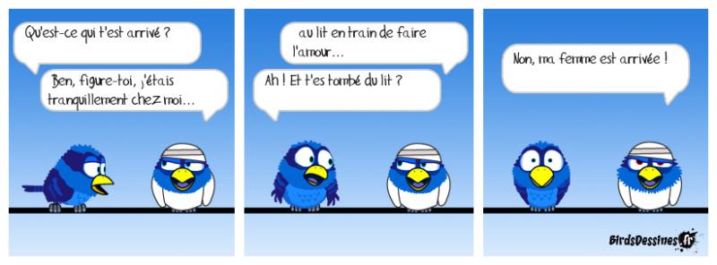 Les birds - Page 7 56544610