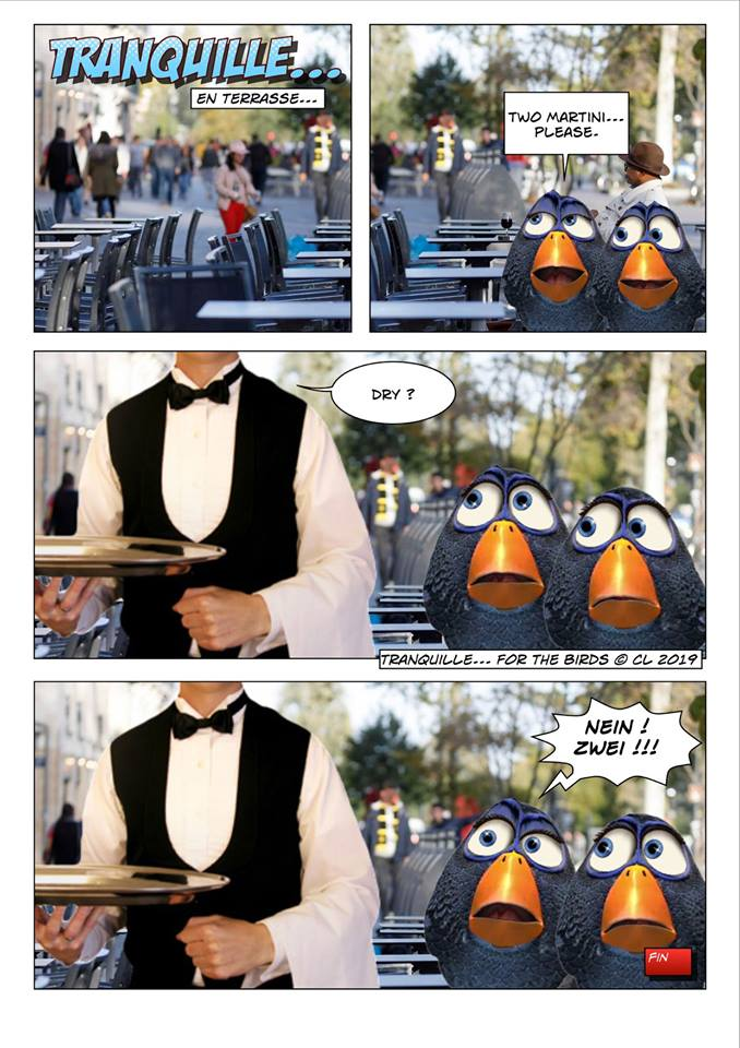 Les birds - Page 7 56580510