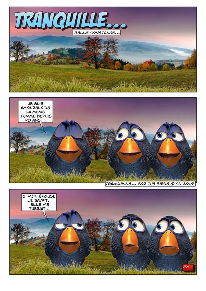 Les birds - Page 7 56644710