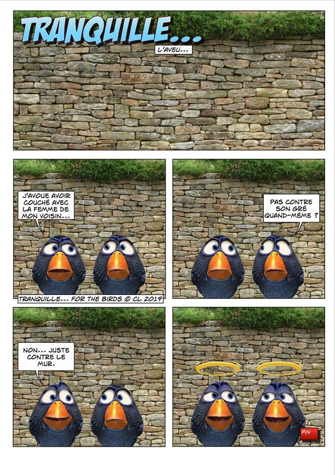 Les birds - Page 7 56685710